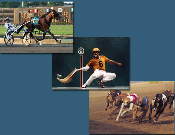 Wagering Inside Tips